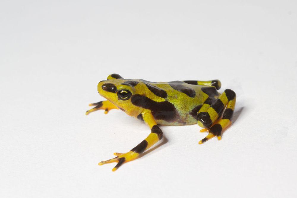 Conservación de anfibios produce resultados