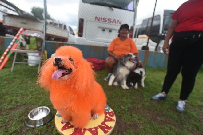 Mónica Lee, Brath, Rafe y otros, dijeron no al maltrato animal