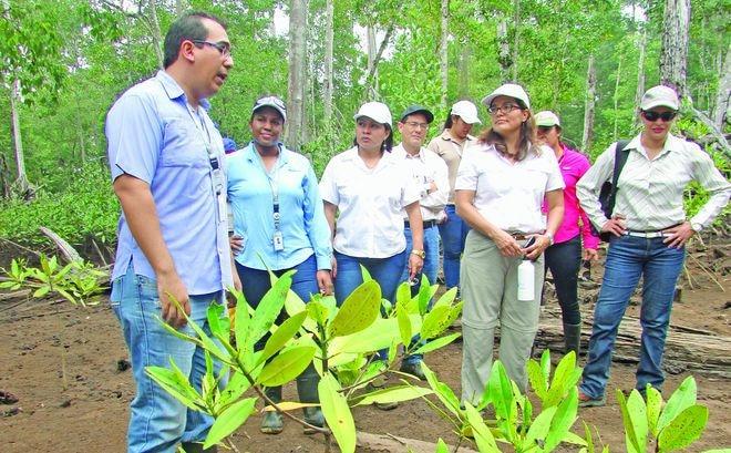 Estudian manglares chiricanos