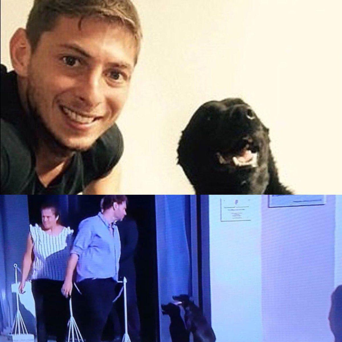 'Nala' la perrita de Emiliano Sala, futbolista fallecido, lo despide