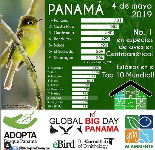Plataformas que te ayudan a contar e identificar los pájaros que hay en Panamá
